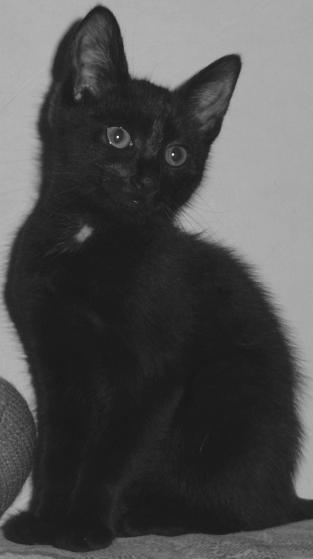 Bautzen Nachrichten Tiere Schwarze Katze Zu Verschenken